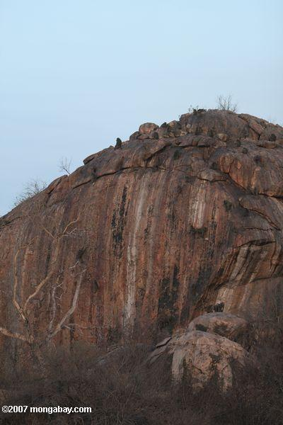Baboons scaling a rock outcropping