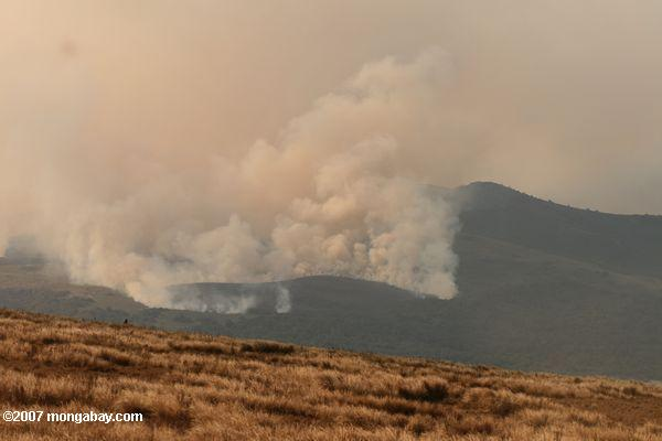 Brush fire in the Ngorongoro Conservation Area