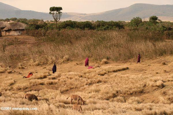 Maasai men in colored robes
