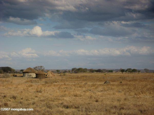Maasai settlement