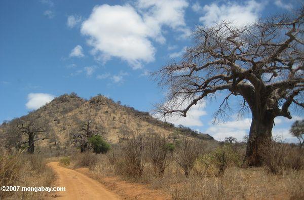 Tarangire hill