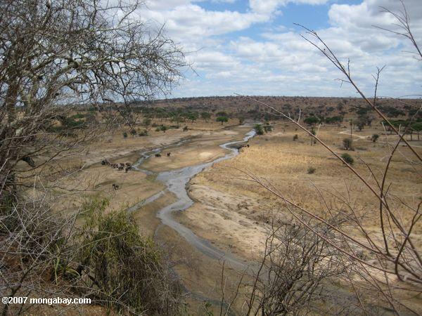River in Tarangire N.P.