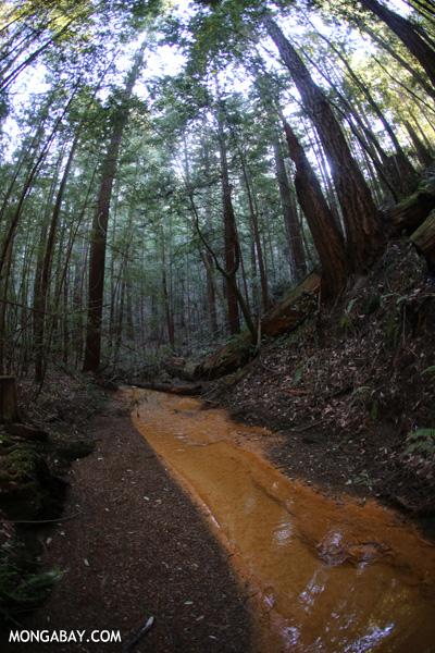 Waddell Creek [ca_big_basin_00139]