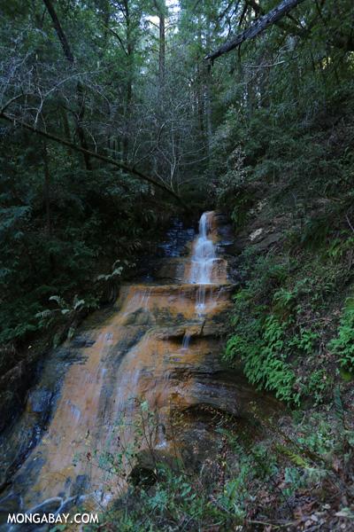 Berry Creek Falls [ca_big_basin_00149]
