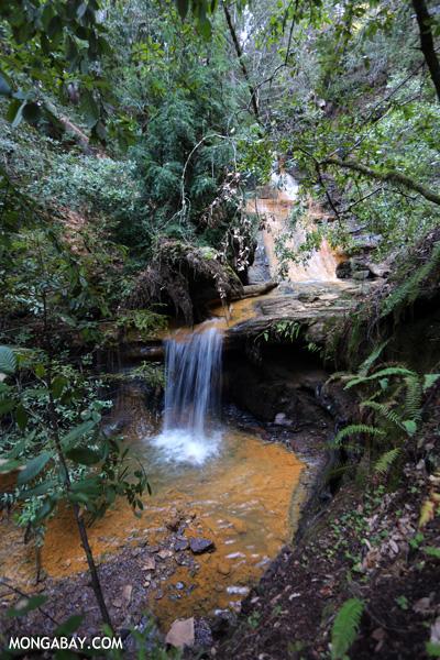 Berry Creek Falls [ca_big_basin_00151]