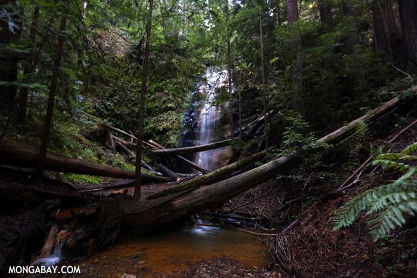 Berry Creek Falls [ca_big_basin_00154]