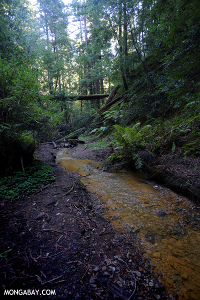 Waddell Creek [ca_big_basin_00155]