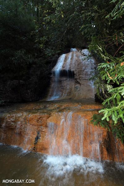Berry Creek Falls on Waddell Creek [ca_big_basin_00174]