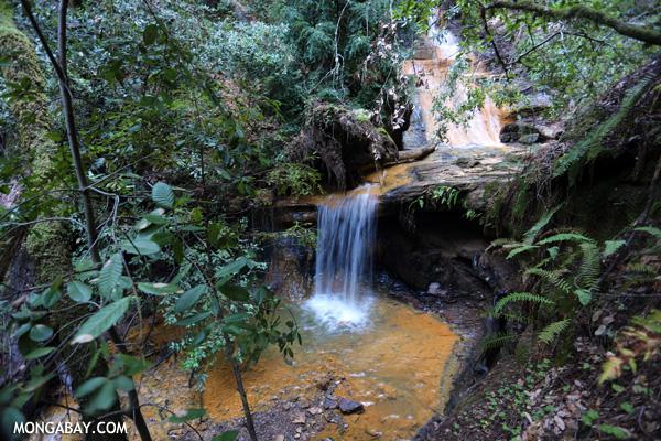 Berry Creek Falls on Waddell Creek [ca_big_basin_00181]
