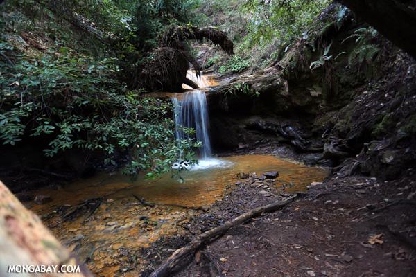 Berry Creek Falls on Waddell Creek [ca_big_basin_00182]
