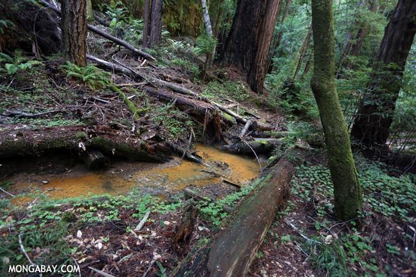 Waddell Creek [ca_big_basin_00189]