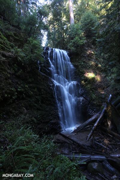 Berry Creek Falls on Waddell Creek [ca_big_basin_00190]