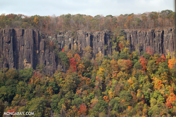 Cliffs along the Hudson River near Dobbs Ferry [pittsfield_state_forest_007]