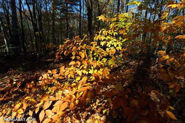 Falls colors in Massachusetts