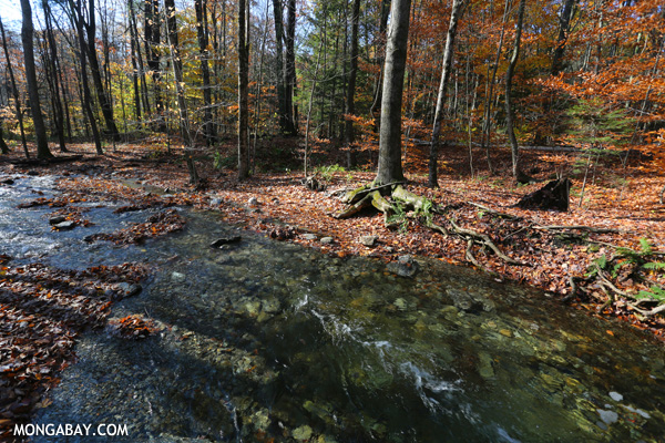 Stream in an East Coast forest
