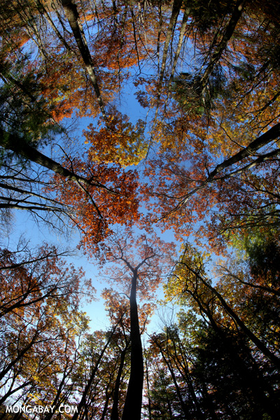 Leaves changing in an East Coast forest