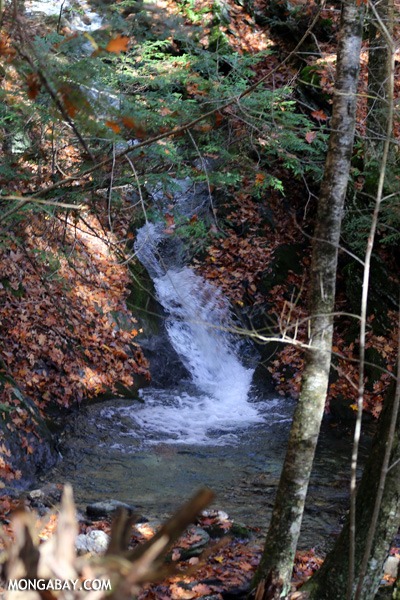 Waterfall in an East Coast forest