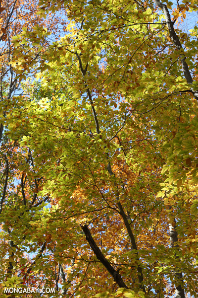 Fall in Pittsfield State Forest [pittsfield_state_forest_073]
