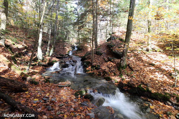 Waterfall in Pittsfield State Forest [pittsfield_state_forest_083]