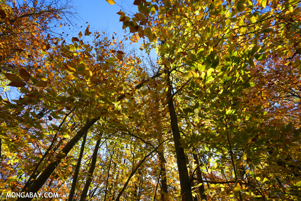 Fisheye view of an East Coast forest canopy