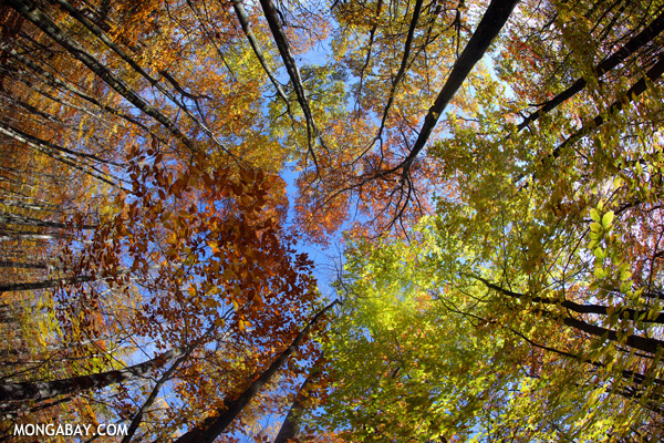 Rainbow forest canopy