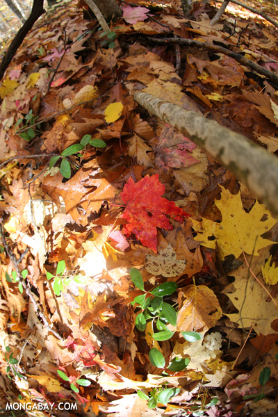 Leaves on the forest floor