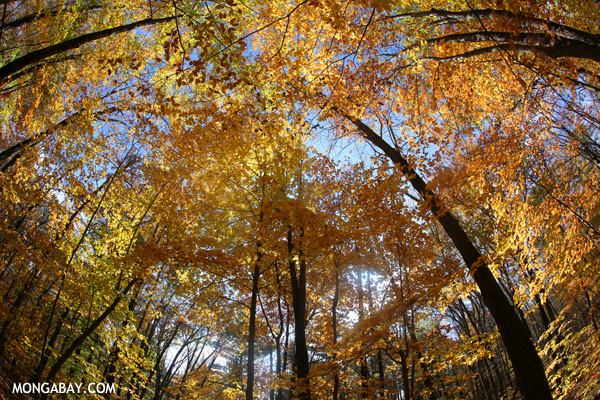 Fall in an East Coast forest [pittsfield_state_forest_178]