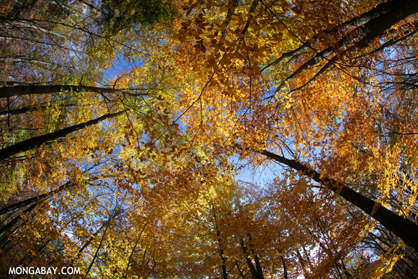Fall in an East Coast forest [pittsfield_state_forest_183]