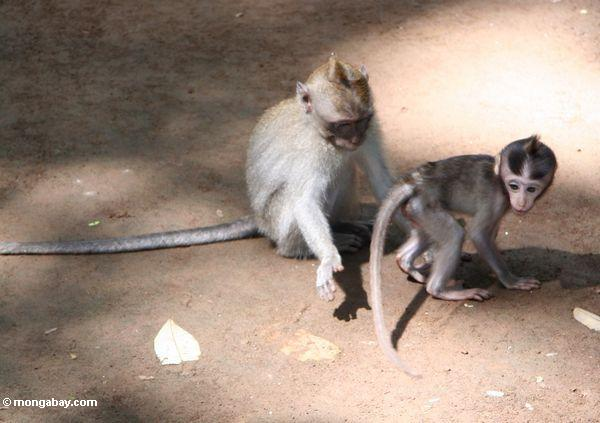 Apologise, but life spank the monkey
