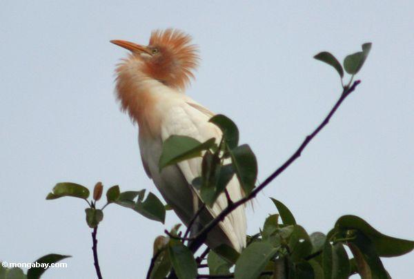 Heron of Putulu, Ubud (Ubud, Bali)