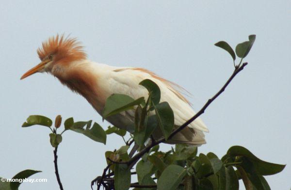 Heron of Petelu, Bali (Ubud, Bali)