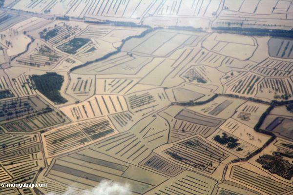Aerial view of flooded costal rice paddies (Java)