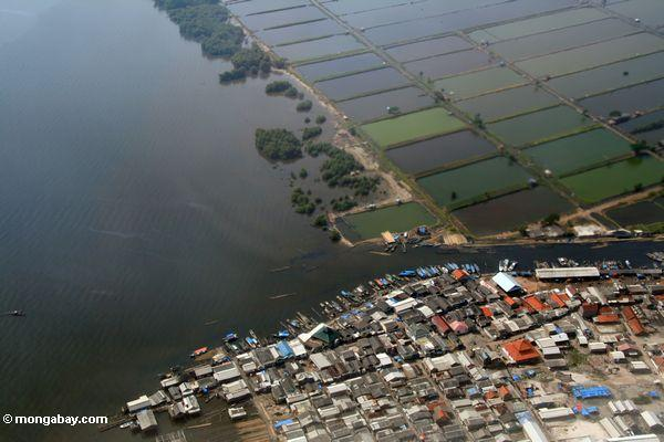 An overhead view of shrimp aquaculture in Java, Indonesia. Photo by Rhett A. Butler / mongabay.com