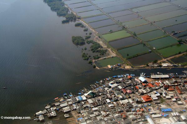 Vista aérea de la acuicultura de camarones en Java, Indonesia. Foto por Rhett A. Butler / mongabay.com