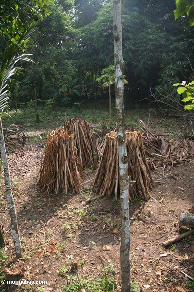 Wood cut from local forest (Java)