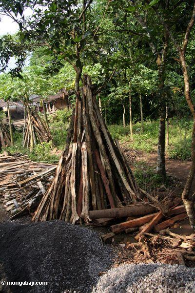 Timber cut from forest (Java)