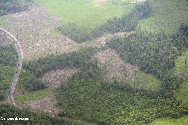 Aerial view of rainforest that has been slash-and-burned ...