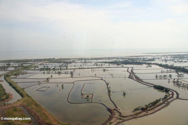 Aerial view of mangrove forests that have been cleared for farming and aquaculture (Kalimantan, Borneo - Indonesian Borneo)