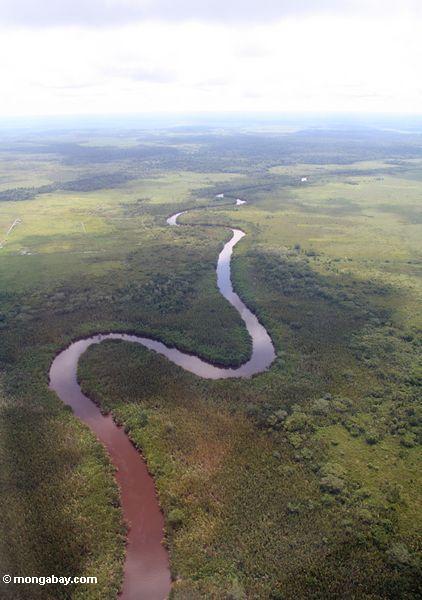 Aerial view of mangrove-lined river in Borneo (Kalimantan, Borneo - Indonesian Borneo)