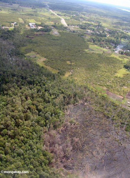 Aerial view of slash-and-burned forest near Pangkalanbun, Kalimantan (Kalimantan, Borneo - Indonesian Borneo)