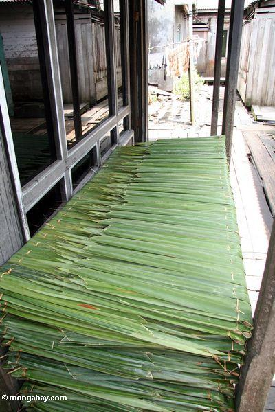 Nipa palm frons cut for roofing material (Kalimantan, Borneo - Indonesian Borneo)