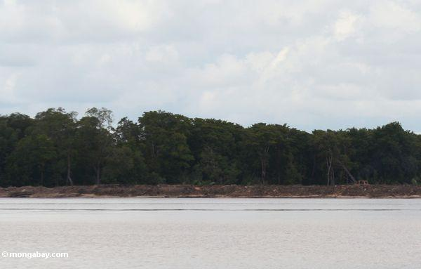 Forest clearing for colonist settlement (Kalimantan, Borneo - Indonesian Borneo)