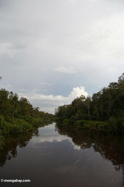 Sekonyer River (Kalimantan, Borneo - Indonesian Borneo)