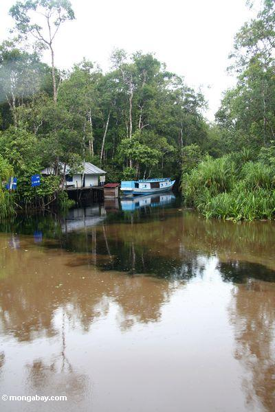 Mixing waters at the junction of Camp Leaky creek and the Seicoyna (Sekonyer) River (Kalimantan, Borneo - Indonesian Borneo)