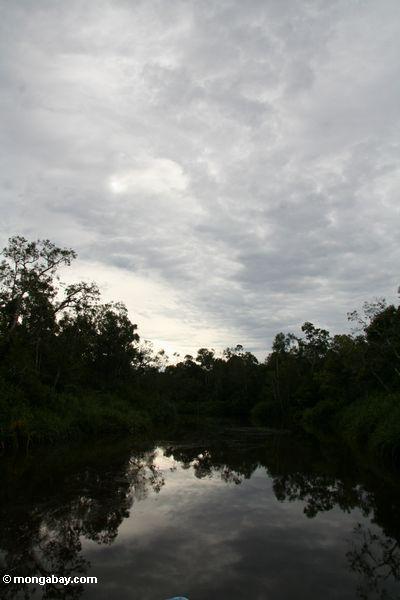 Sunset on the Sekonyer River (Kalimantan, Borneo - Indonesian Borneo)