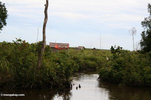 Houses on the deforested plain just outside Tanjung Puting National Park (Kalimantan, Borneo - Indonesian Borneo)