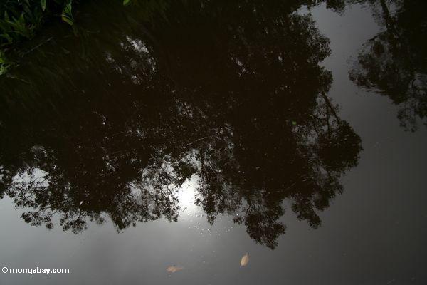Reflection in the Seikonyer River of the setting sun (Kalimantan, Borneo - Indonesian Borneo)