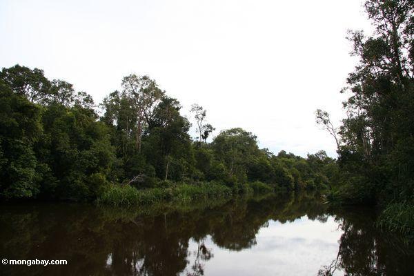 Seikonyer River (Kalimantan, Borneo - Indonesian Borneo)