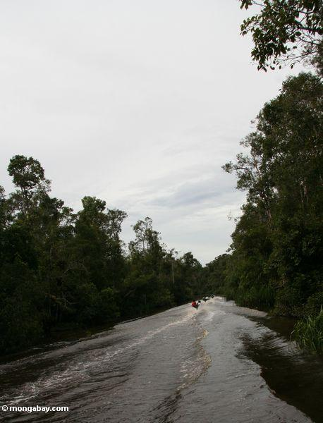 Speedboats carrying miners on the Seikonyer River (Kalimantan, Borneo - Indonesian Borneo)