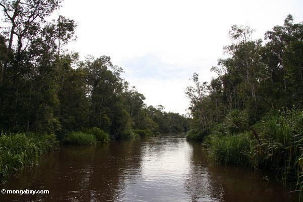 Seikonyer River (Kalimantan, Borneo - Indonesian Borneo) -- kali9595